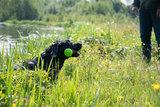 Dog Comets Meteor Werpstok groen L_